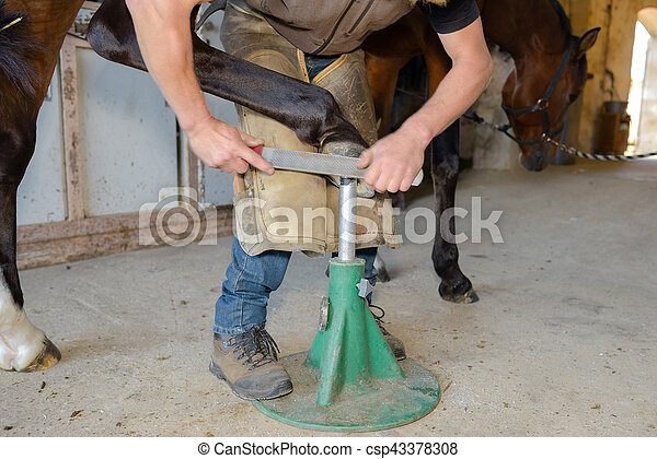 maintenance of the hoof - csp43378308