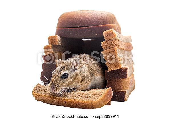souris dans la maison beautiful chez romuald la taverne souris duagneau maison with souris dans. Black Bedroom Furniture Sets. Home Design Ideas