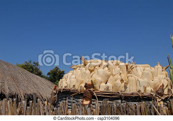 maize - csp3104096