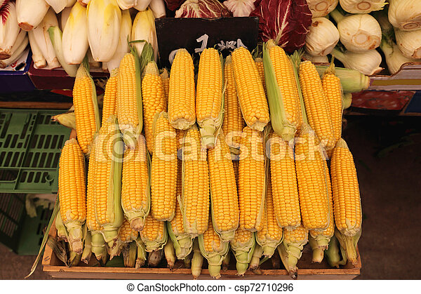 Maize - csp72710296