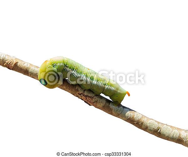 zöld féreg parazitaellenes kúra