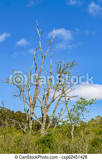 maldonado, 公園, 固有, ウルグアイ, 部門 - csp62451428