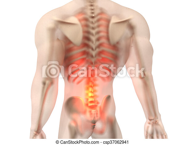 Male anatomy - back pain. Pain in the back. 3d rendered illustration.