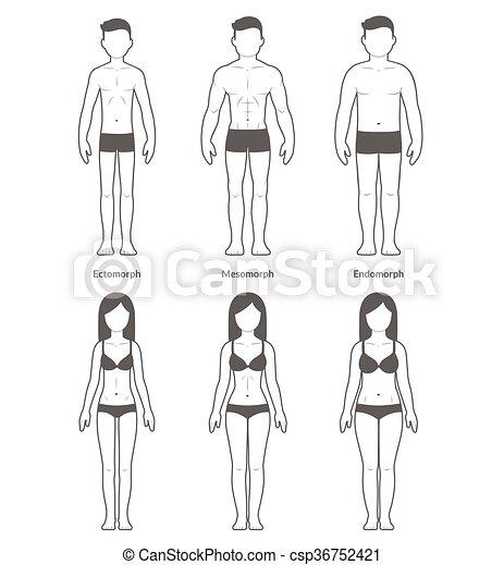 Body types Vector Clip Art Royalty Free  3,483 Body types