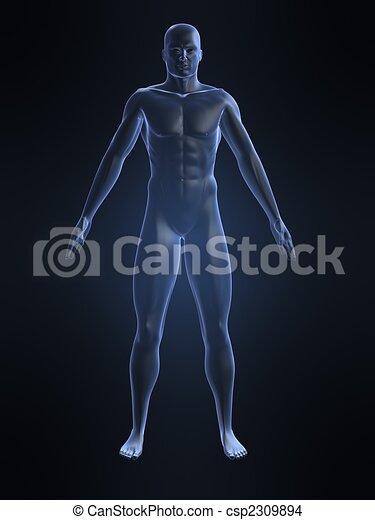 male body shape - csp2309894