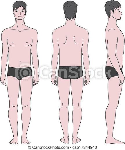 male figure vector illustration of male figure front back side