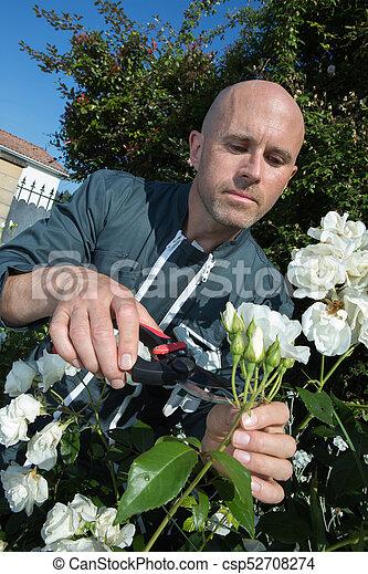 male gardener cutting flowers - csp52708274