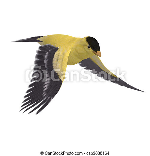 Male Goldfinch. 3D rendering and shadow over white - csp3838164