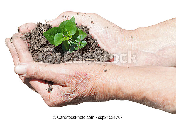 male hands with soil and green sprout - csp21531767