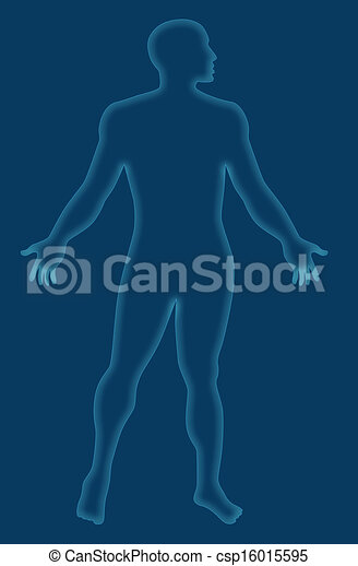 Male Human Anatomy Outline Blue Illustration Of A Blue Human