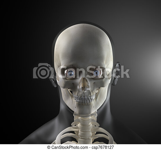 Male human head x-ray front view.