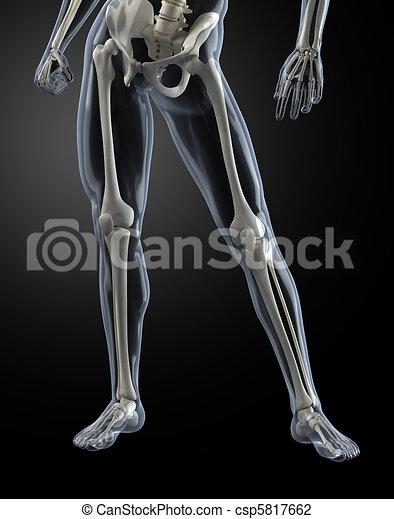 Male Human Legs X-ray - csp5817662