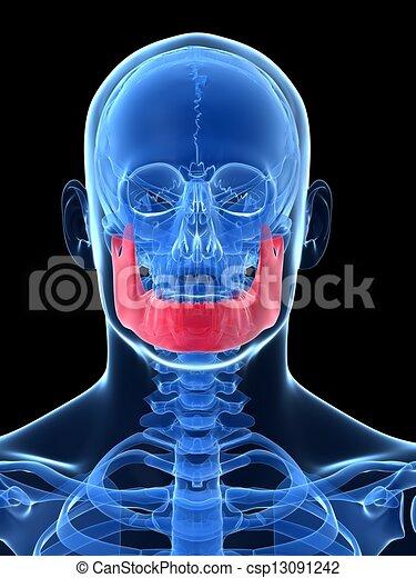 Male jawbone - csp13091242