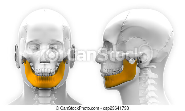 Male Mandible Bone Skull Anatomy - isolated on white - csp23641733