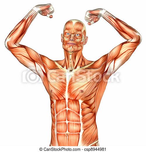 Male Upper Body Anatomy - csp8944981