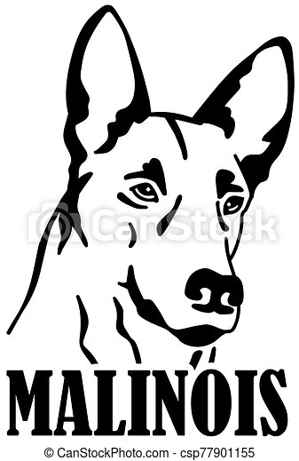 Malinois head with name - csp77901155