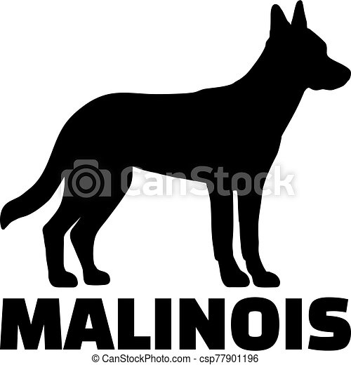 Malinois silhouette with name - csp77901196