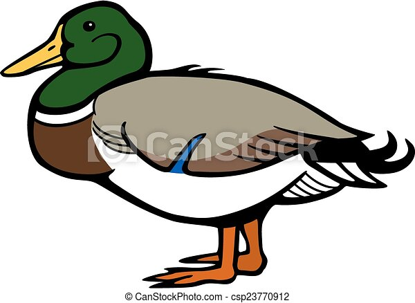 vector illustration male mallard duck standing side view vector clip rh canstockphoto com