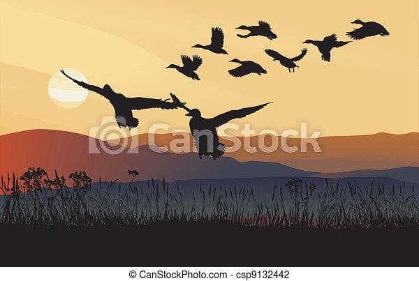 Mallard ducks at sunrise - csp9132442