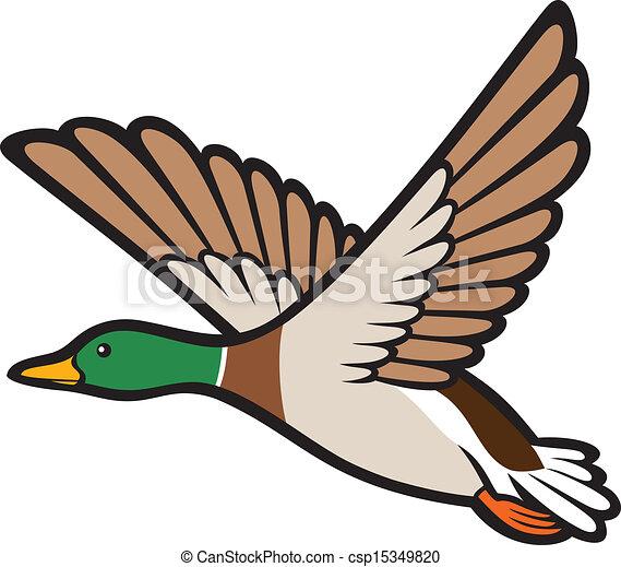 mallard, voando, pato - csp15349820