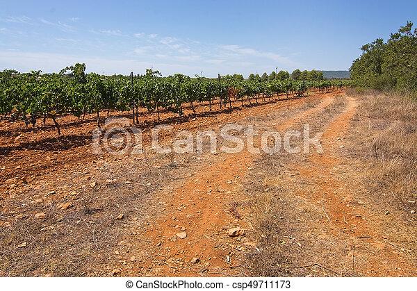 Mallorca vineyard - csp49711173