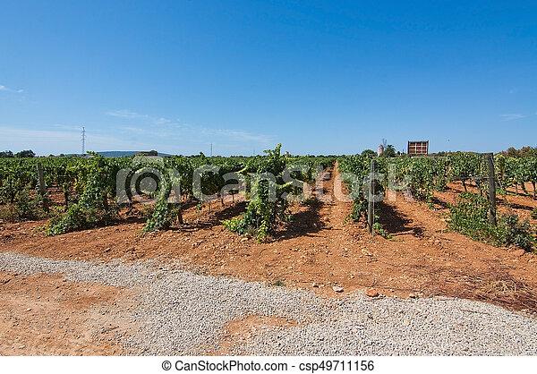 Mallorca vineyard - csp49711156