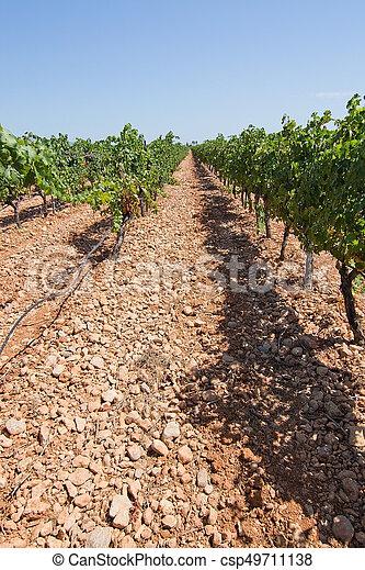 Mallorca vineyard - csp49711138