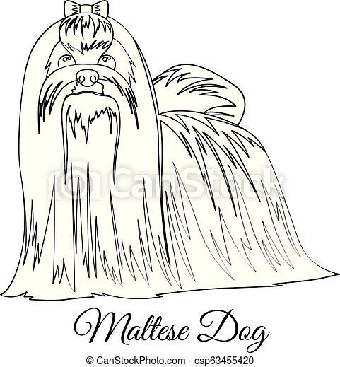 Maltese dog coloring