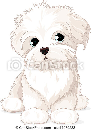 Maltese Puppy Dog - csp17979233