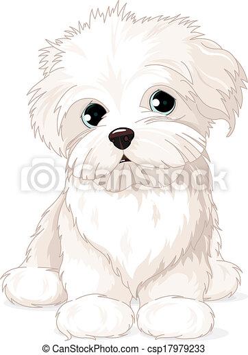 maltesisch, junger hund, hund - csp17979233