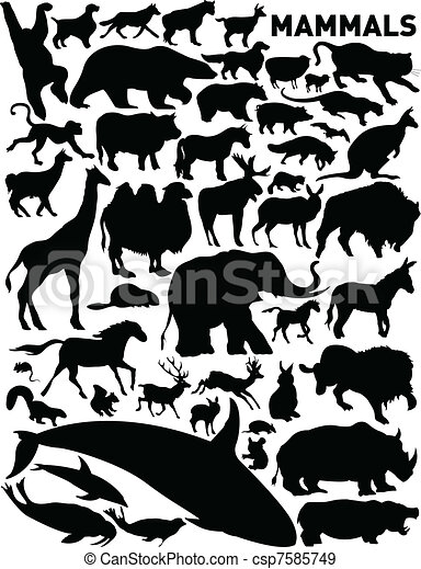 mamíferos - csp7585749