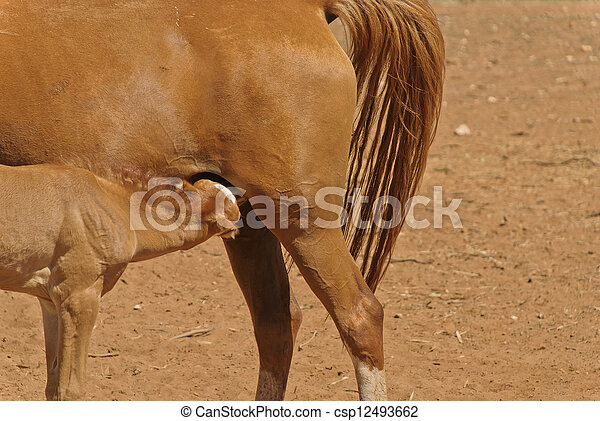 mammal - csp12493662