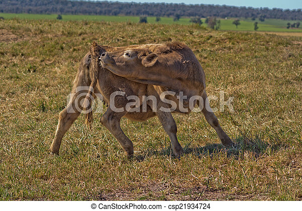 mammal - csp21934724