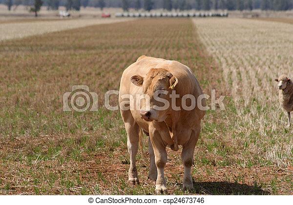 mammal - csp24673746