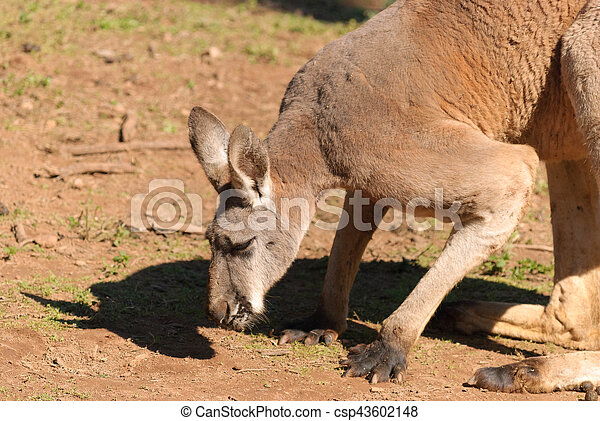 mammal - csp43602148