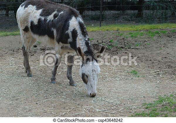 mammal - csp43648242