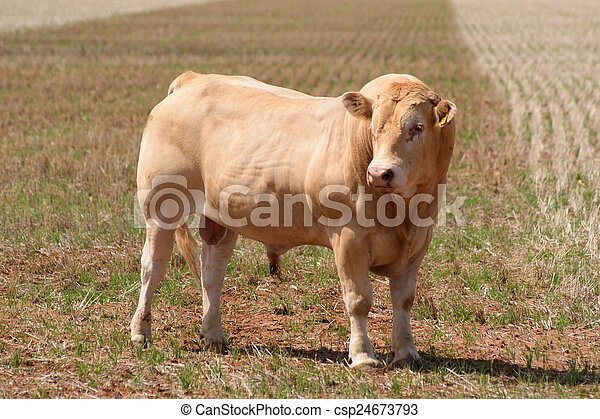 mammal - csp24673793