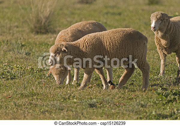 mammal - csp15126239