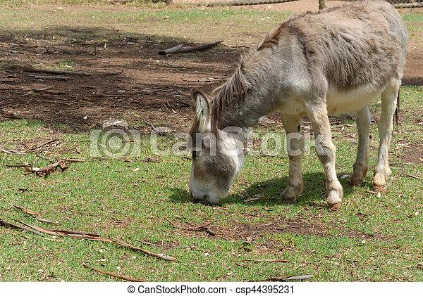 mammal - csp44395231