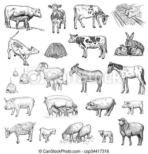Mammals Hands Drawing Mammals Hand Drawing Set Of Vector