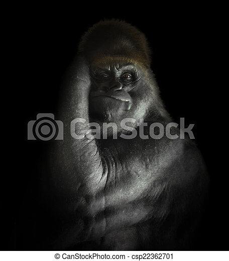 mammifero, gorilla, potente, isolato, nero - csp22362701