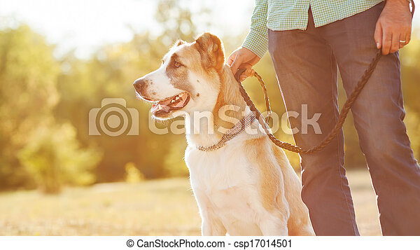 Man and central Asian shepherd walk in the park. He keeps the dog on the leash. - csp17014501