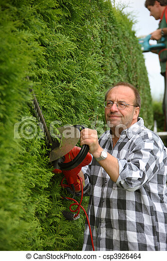 Man cuts hedges in the garden - csp3926464
