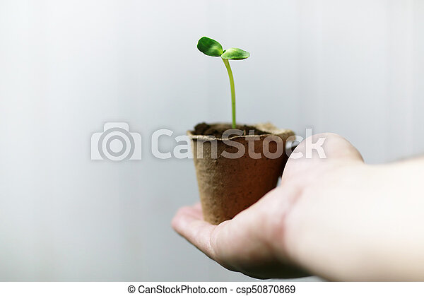 man hand holding sprout in palms - csp50870869