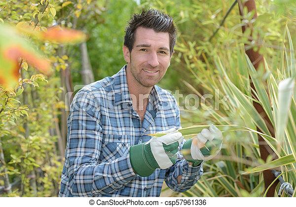 Man inspecting leaf of plant - csp57961336