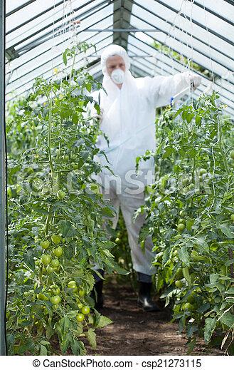Man spraying tomatoes - csp21273115