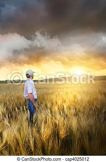 Man standing in a field of wheat - csp4025012