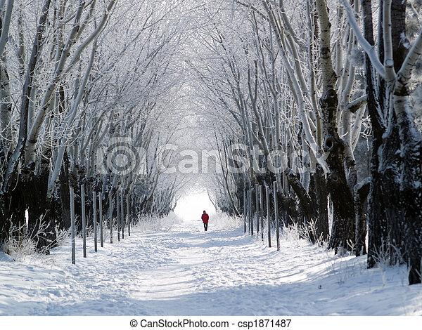 Man walking forest lane in winter - csp1871487