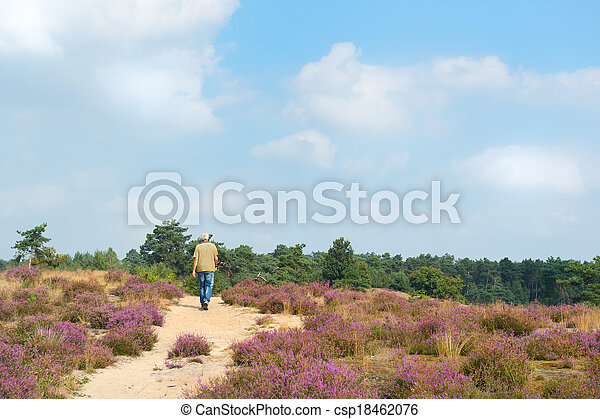 Man walking in heather fields - csp18462076