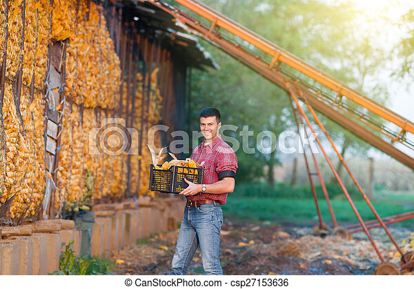 Man with corn cobs in crates - csp27153636